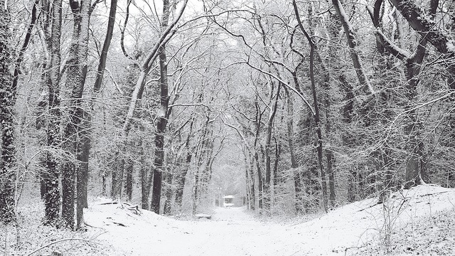 Serbian forest cc licence Timar Noel